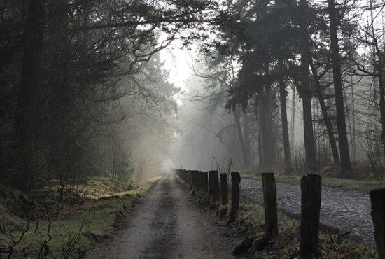 drenthe-omgeving-vakantie-natuur